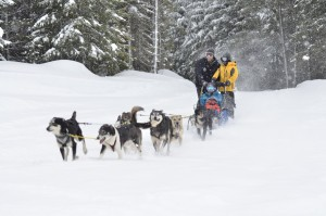 Mountain Mushing