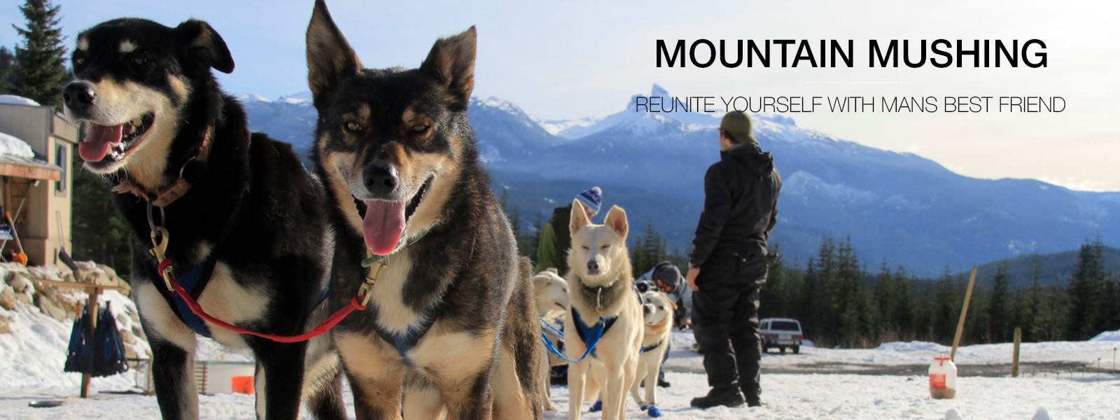 Mount Mushing Banner