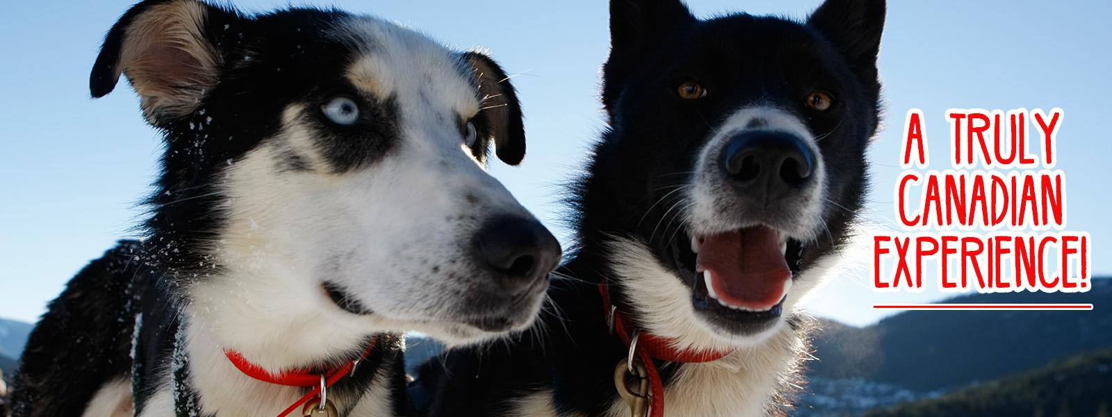 Whistler Dogsled Tours